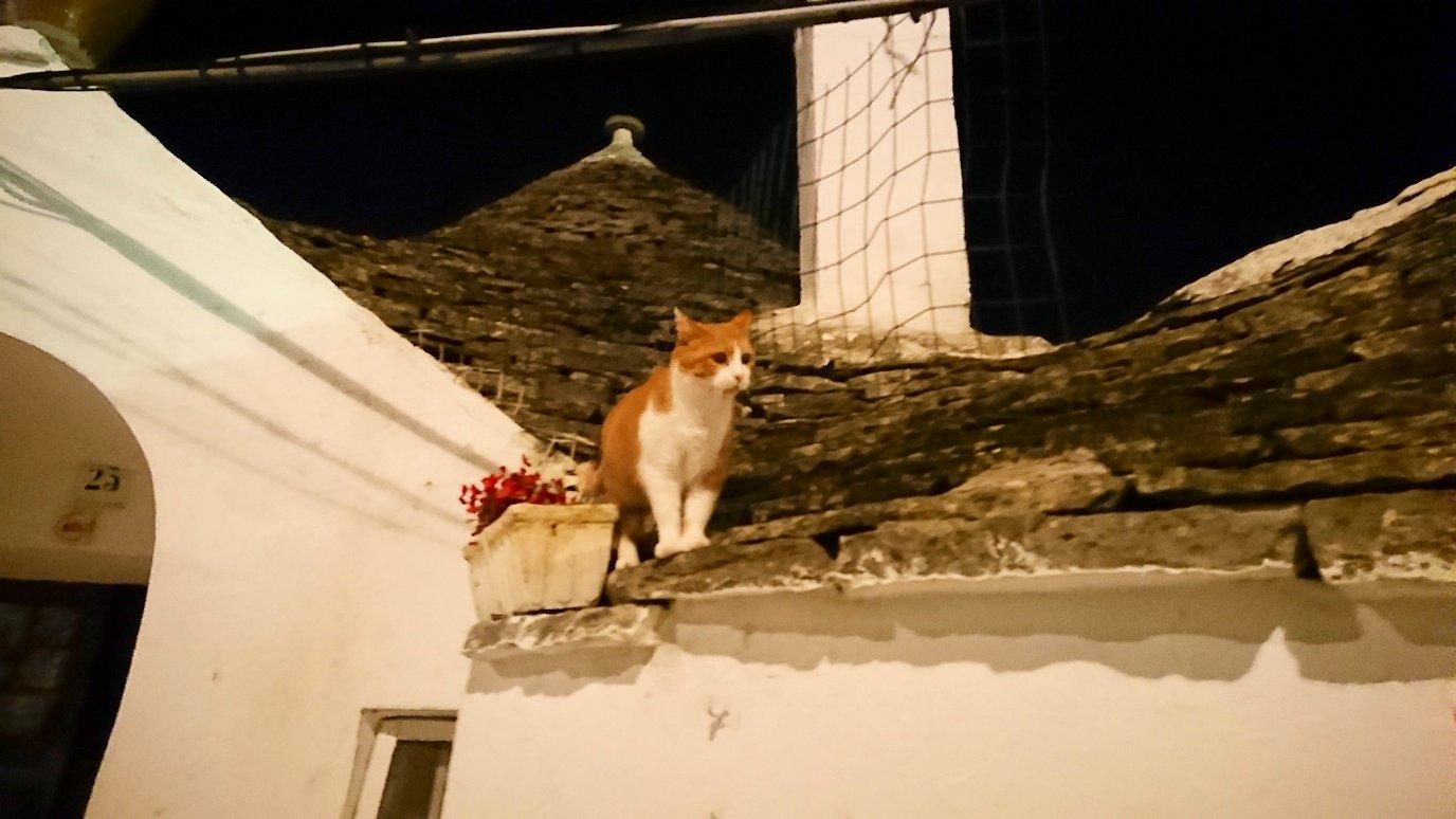 夜のアルベロベッロのモンティ地区のトゥルリの上にいた猫