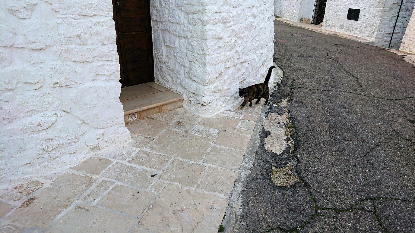 朝のアルベロベッロで見かけた人懐っこい猫