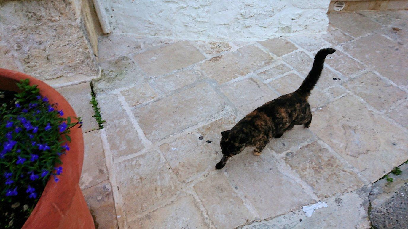 朝のアルベロベッロで見かけた人懐っこい猫3
