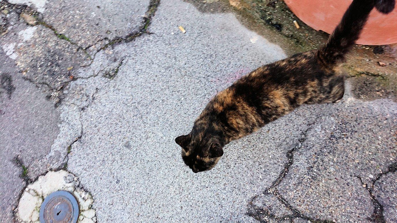 朝のアルベロベッロで見かけた人懐っこい猫4