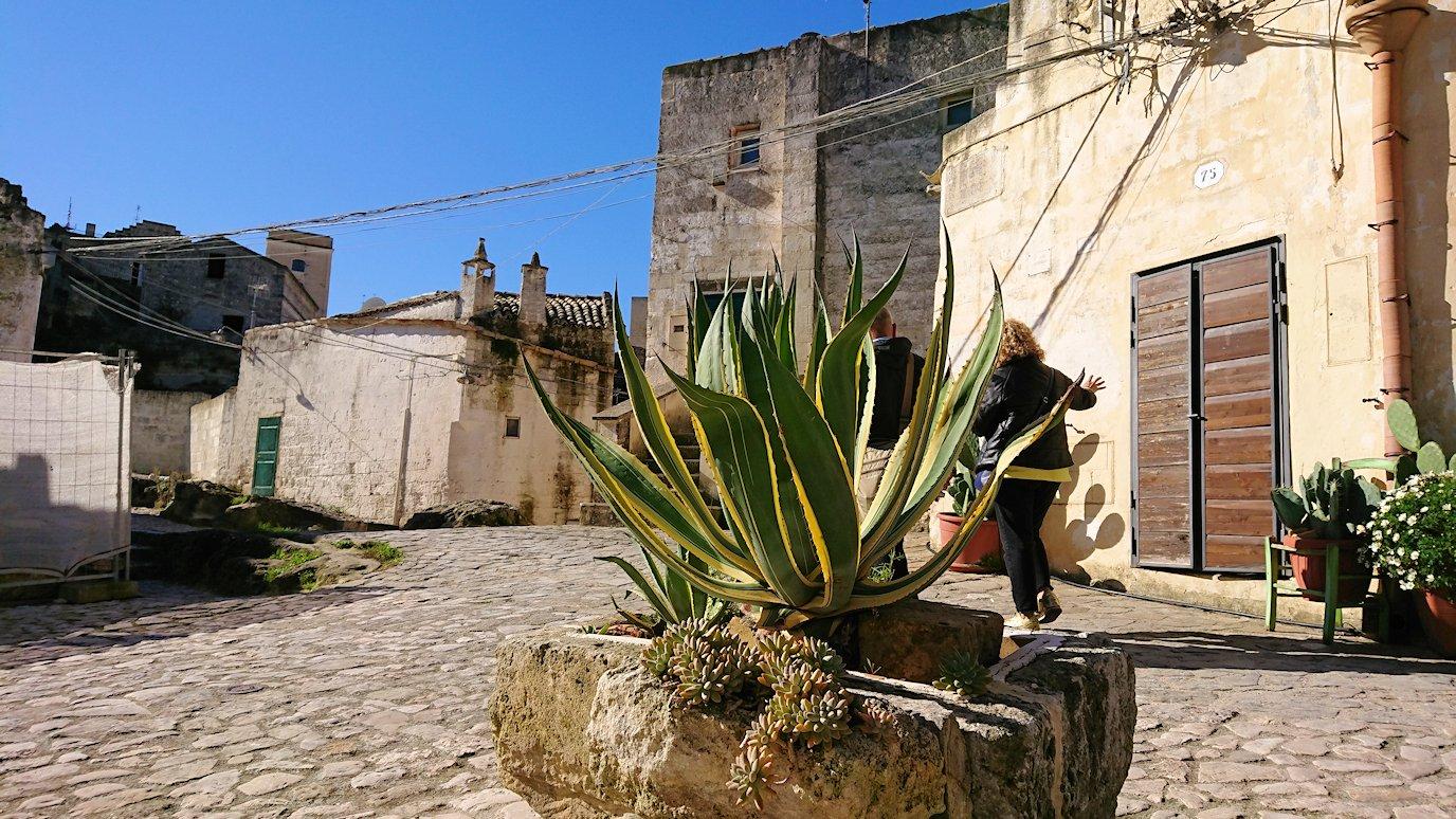 マテーラのサッシの建物前の植物
