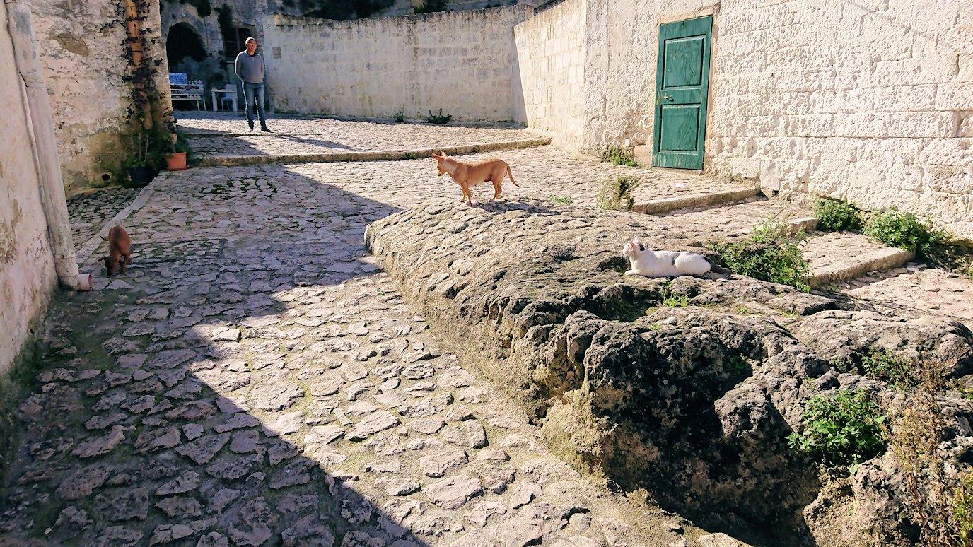マテーラのサッシの建物前で見かけた犬と猫