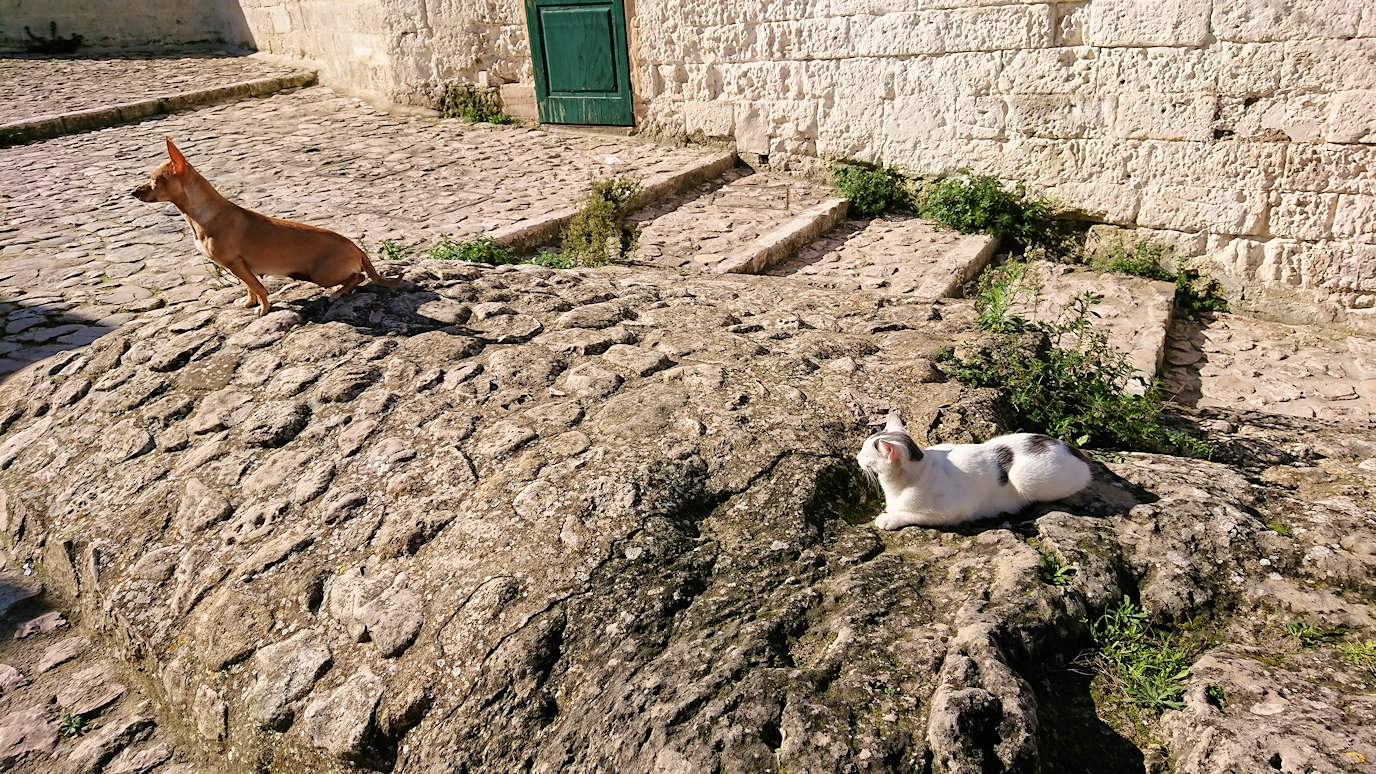 マテーラの街の建物前で見かけた猫ちゃん