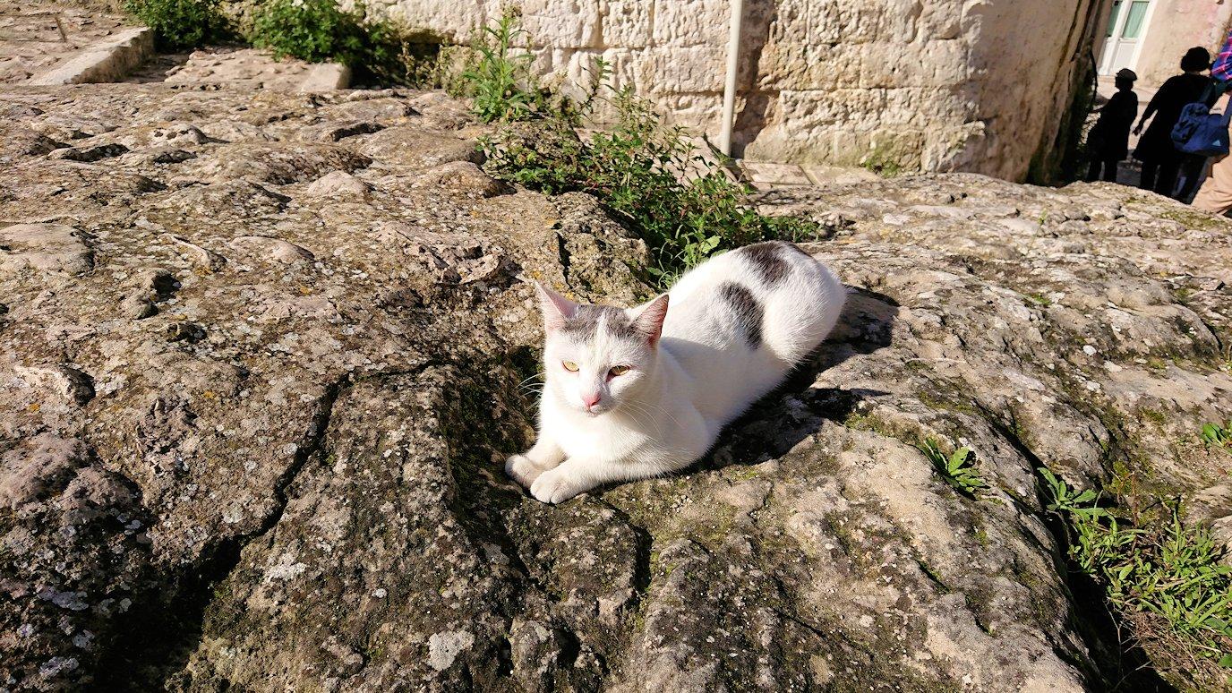 マテーラの街の建物前で見かけた猫ちゃん2