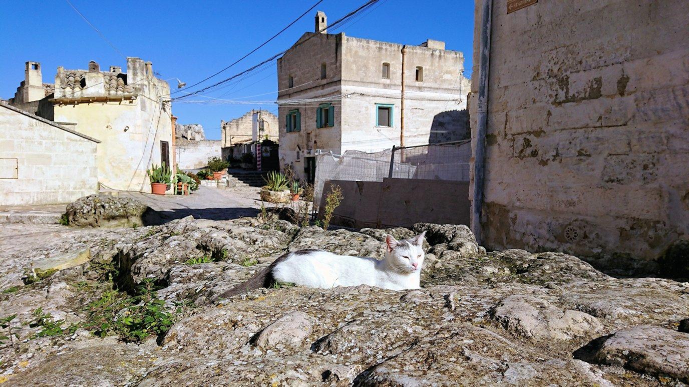 マテーラの街の建物前で見かけた猫ちゃん3