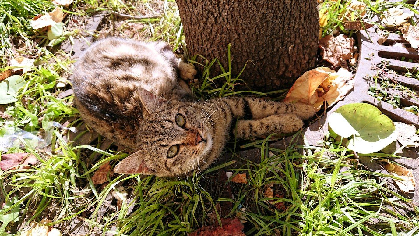 マテーラの街の広場近くのカフェ横で見つけた猫3