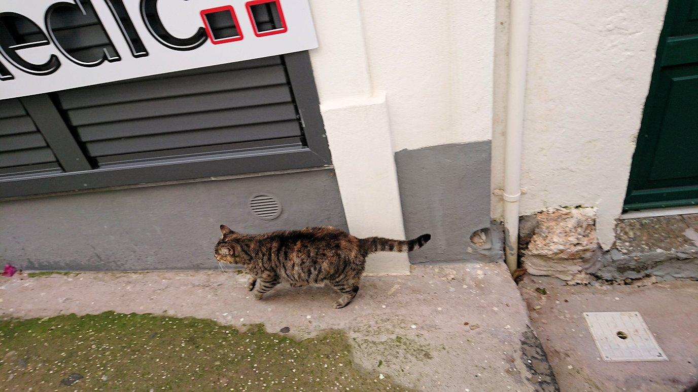 カプリ島のウンベルト1世広場からレストランを目指して歩く途中に見た猫