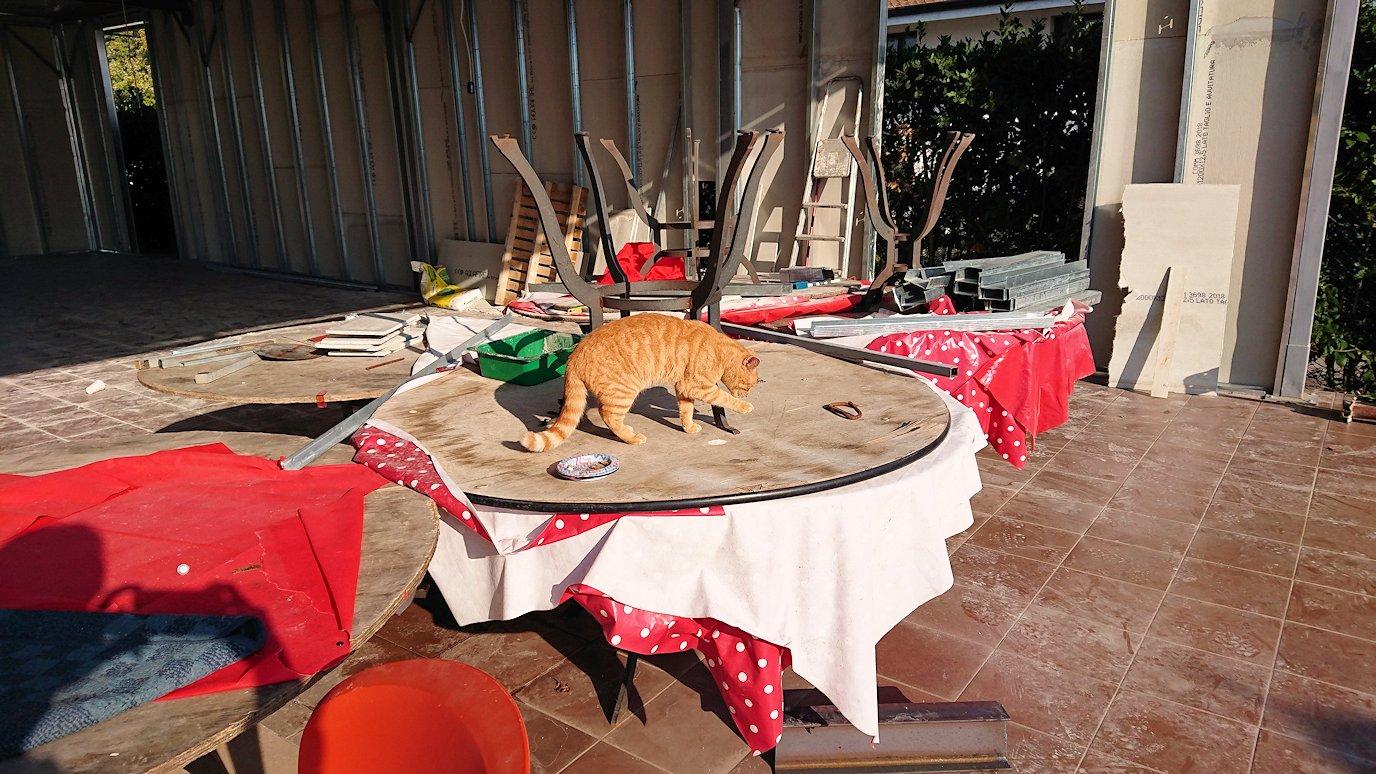 ナポリから空港のあるローマへ移動する途中の休憩所にいた猫