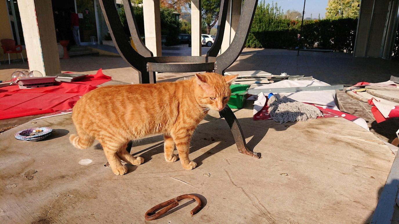 ナポリから空港のあるローマへ移動する途中の休憩所にいた猫3