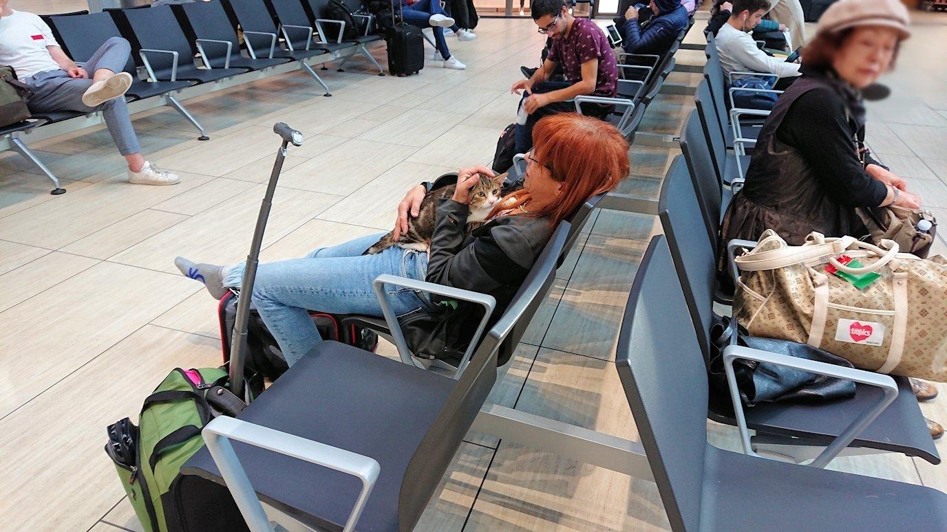 ローマ空港内で猫を抱える人