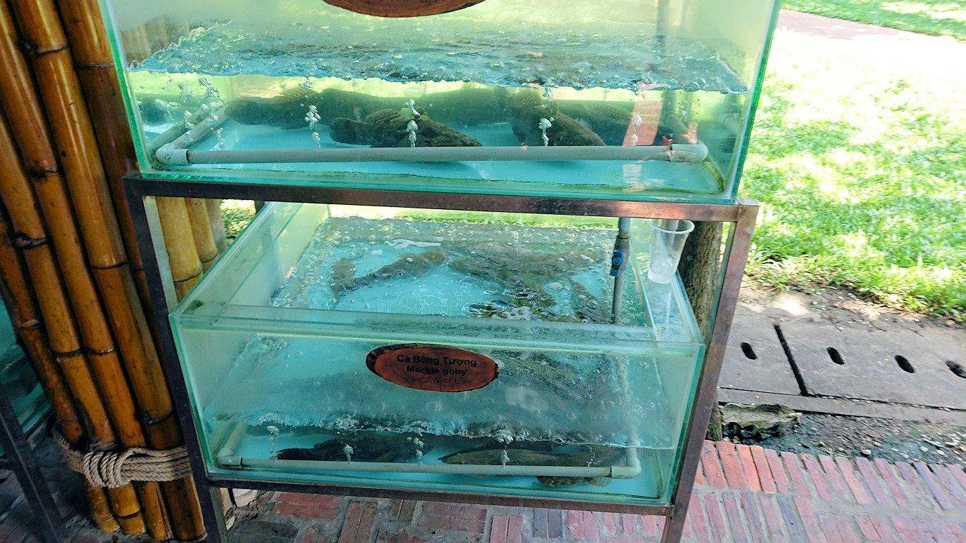 エレファントフィッシュが食べれる昼食レストラン会場の水槽に入っている魚