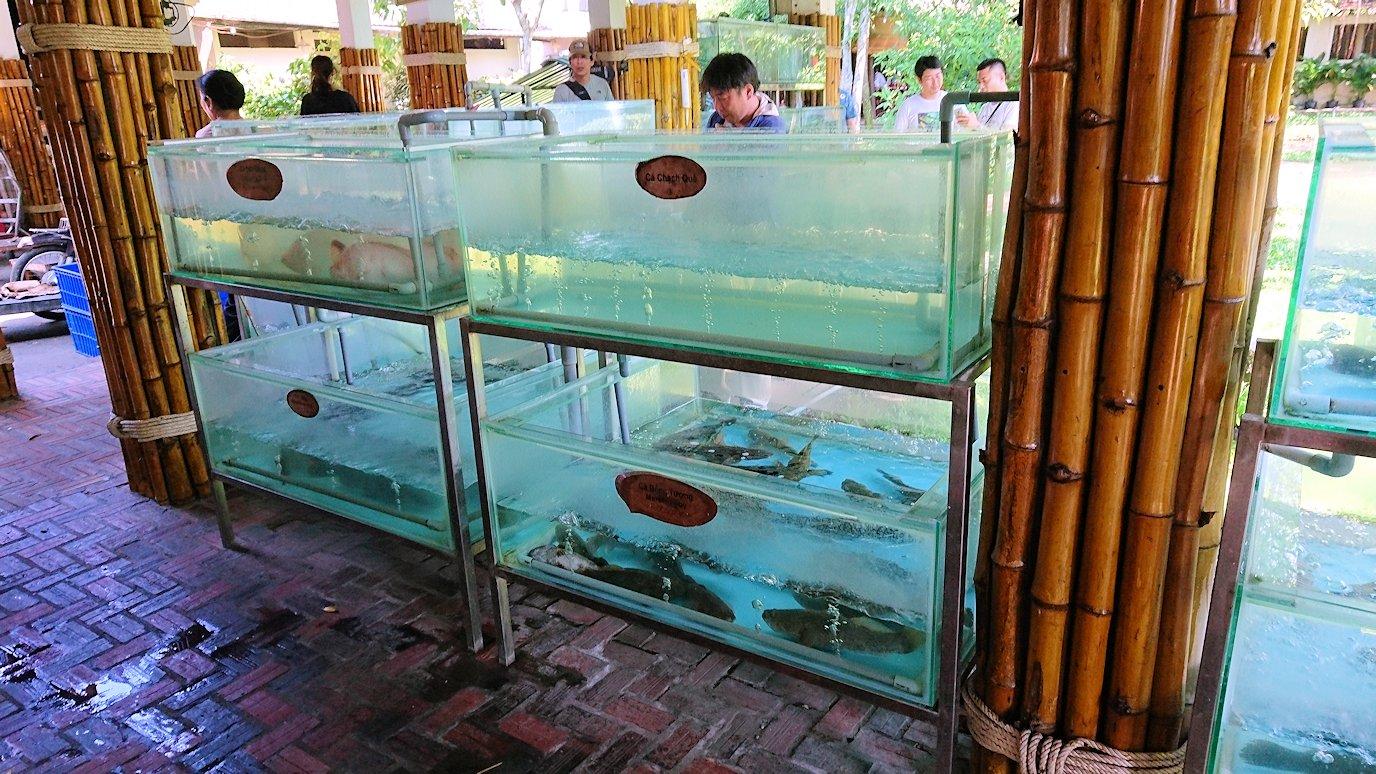 エレファントフィッシュが食べれる昼食レストラン会場の水槽に入っている魚2
