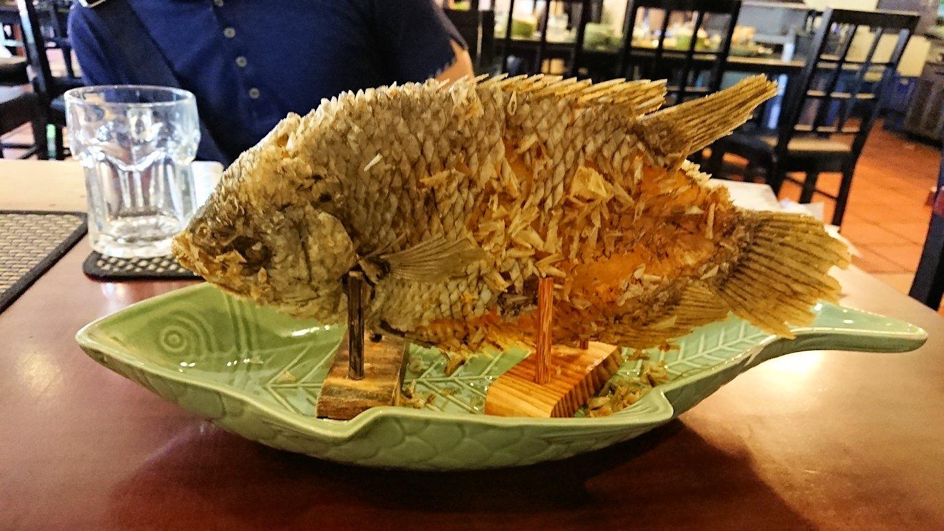 エレファントフィッシュが食べれる昼食レストラン会場でついにお目当ての品が登場