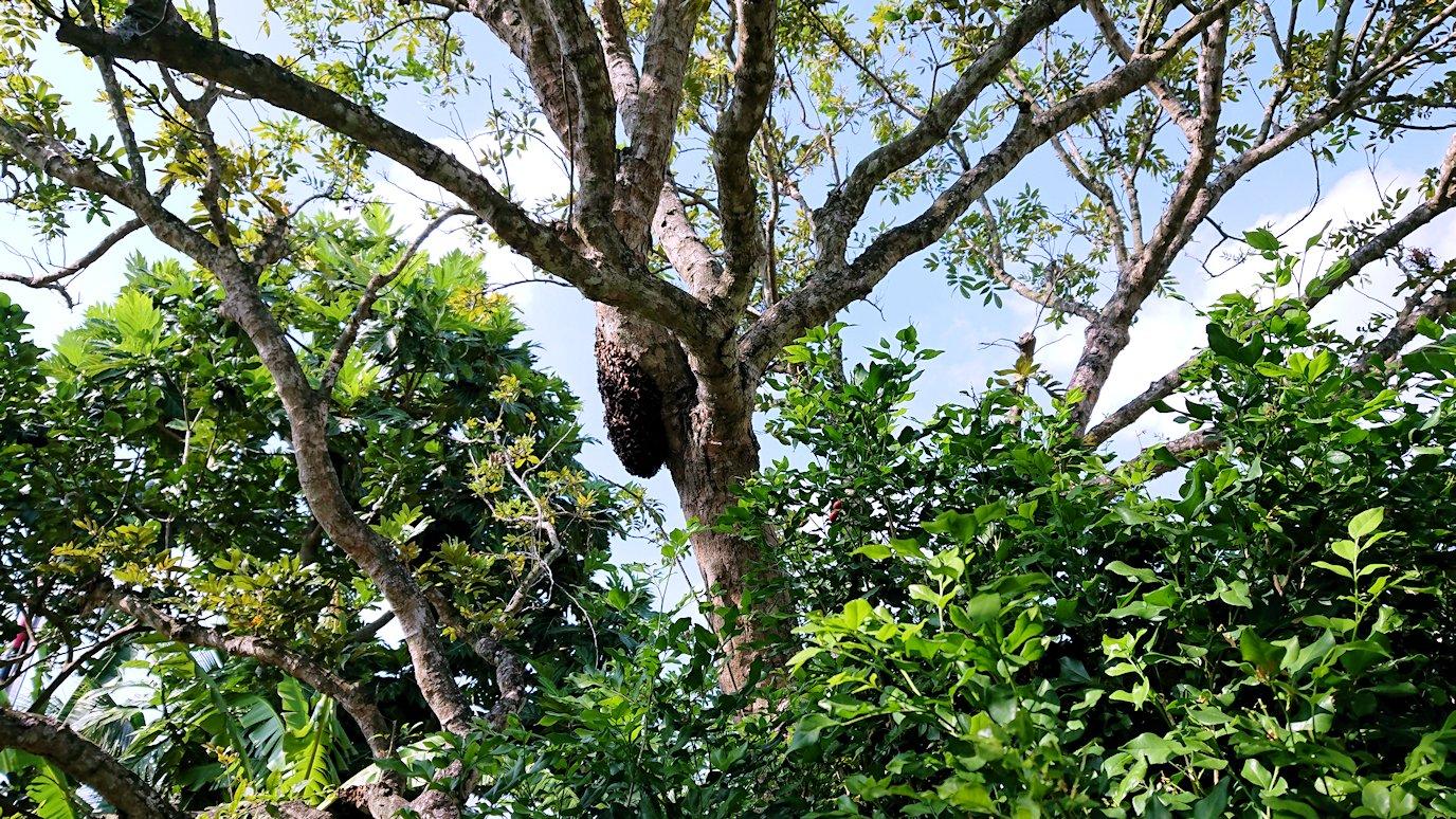 メコン川クルーズで渡った島の蜂蜜オバちゃん2