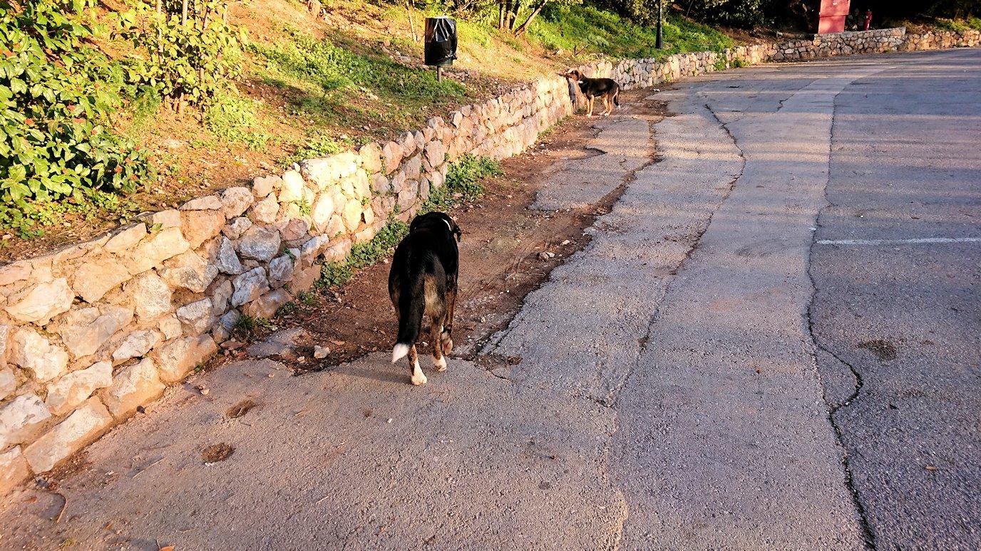 デルフィ遺跡前に居座っているイヌたち