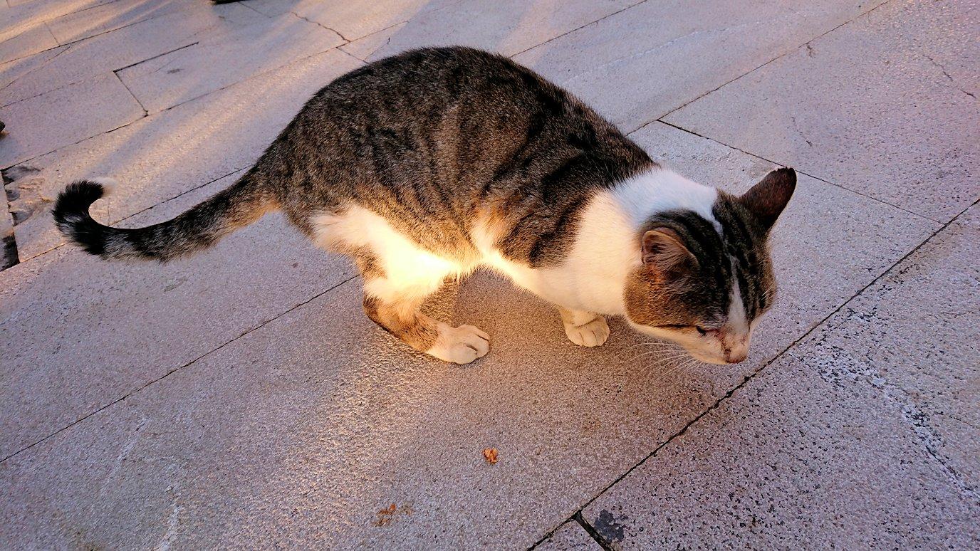 デルフィ遺跡前で出会った猫ちゃんたち2