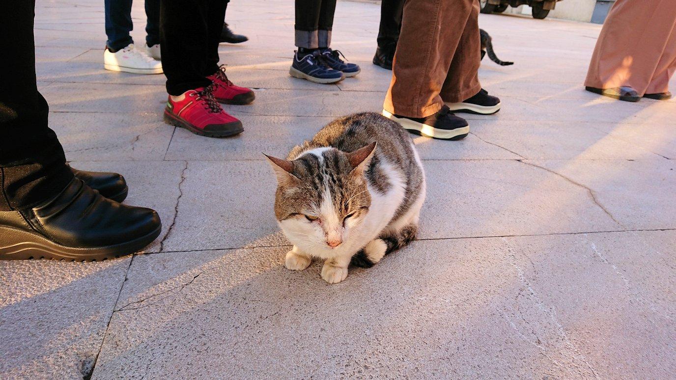 デルフィ遺跡前で出会った猫ちゃん4