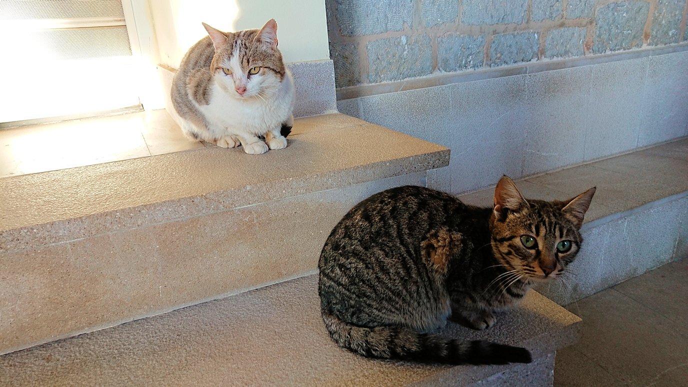 デルフィ遺跡前の博物館前の猫ちゃんがたたずむ場所3