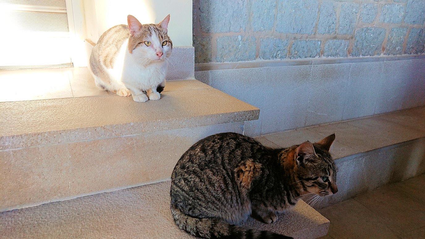 デルフィ遺跡前の博物館前の猫ちゃんがたたずむ場所4