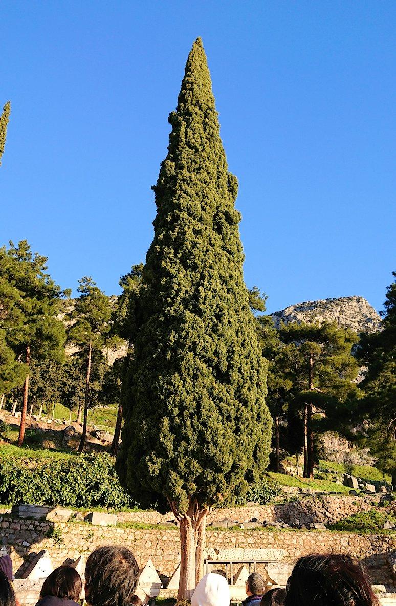 デルフィ遺跡前の博物館前から見える木