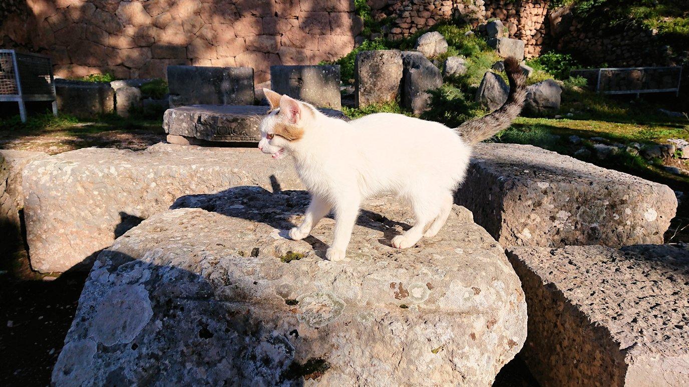 デルフィ遺跡に入る前に現地ネコからの挨拶もあります2