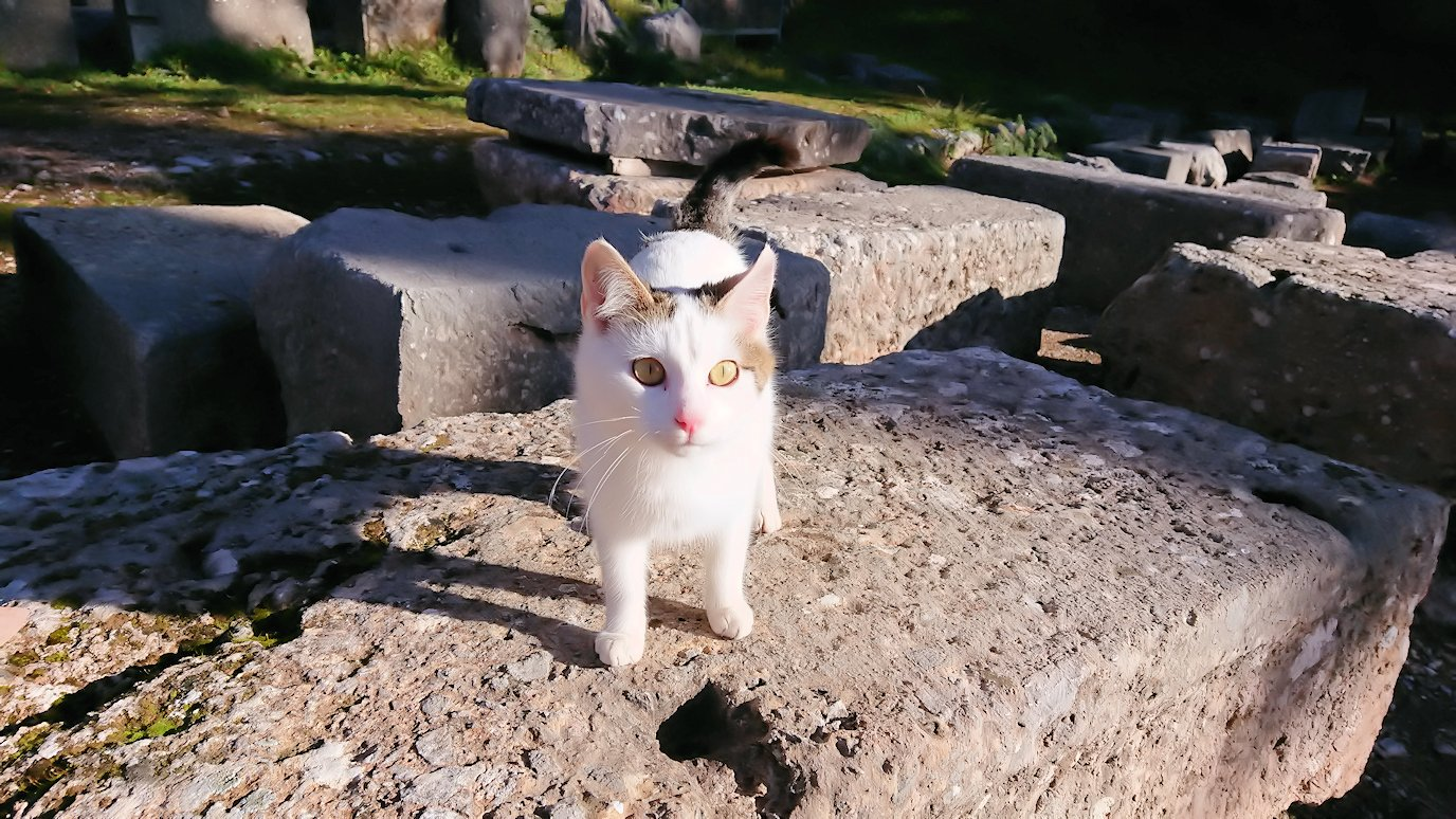 デルフィ遺跡に入る前に現地ネコからの挨拶もあります3