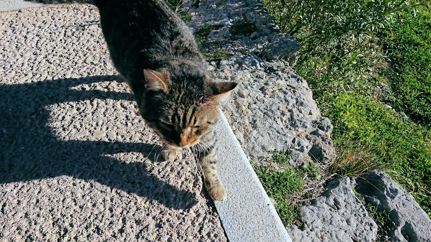 デルフィ遺跡でアポロン神殿を守る?猫ちゃんが寄ってくる