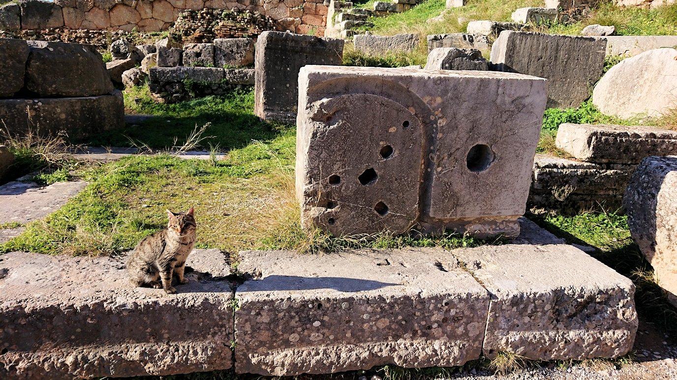 デルフィ遺跡でアポロ神殿から昇る途中に見かけた猫