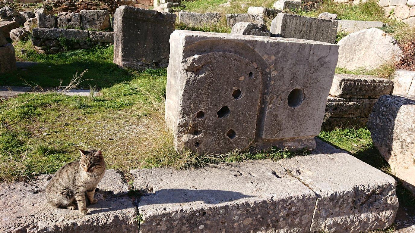 デルフィ遺跡でアポロ神殿から昇る途中に見かけた猫2