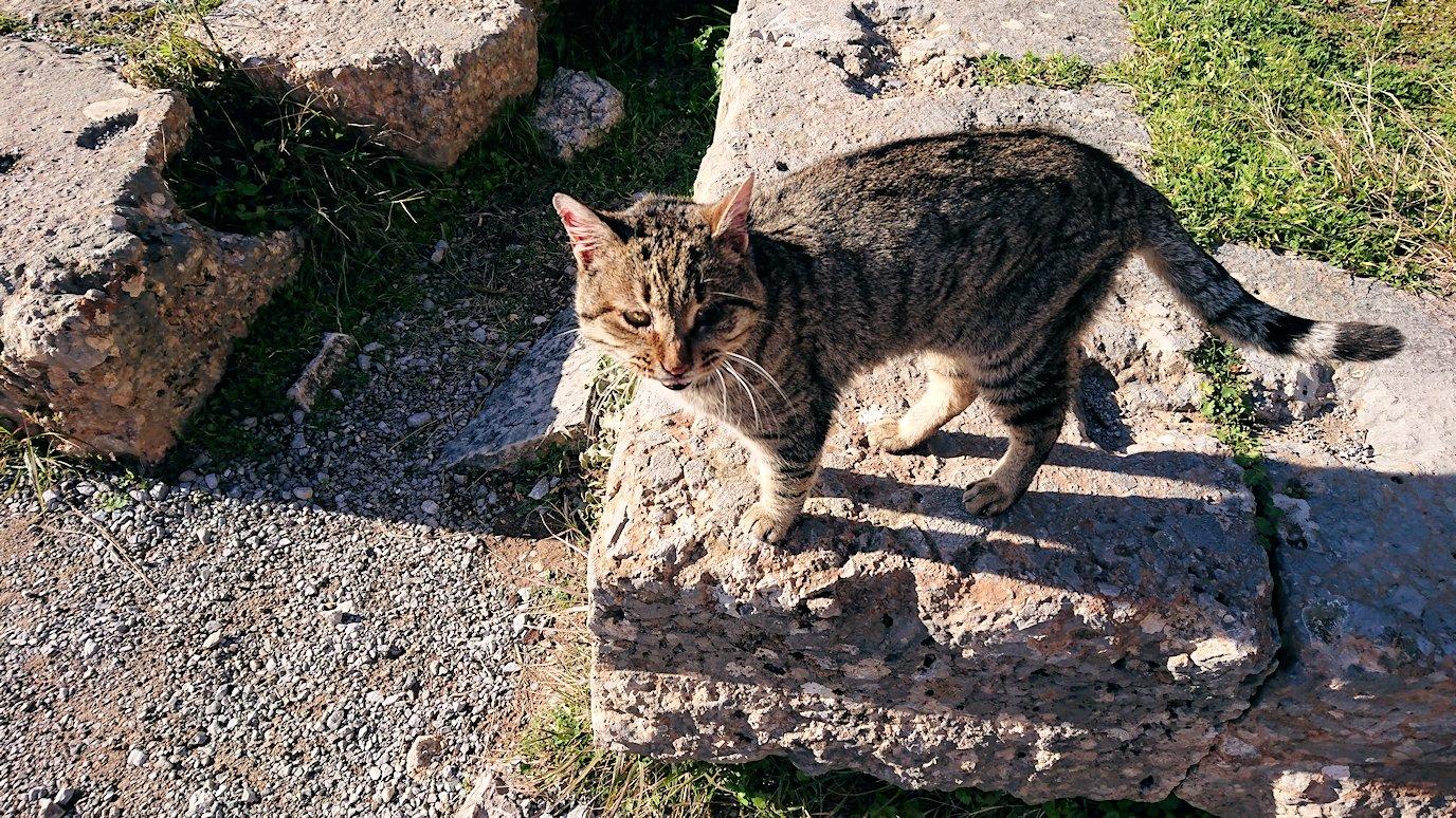 デルフィ遺跡でアポロ神殿から昇る途中に見かけた猫3
