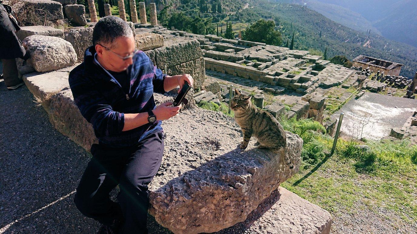 デルフィ遺跡の劇場跡で猫の写真を撮る