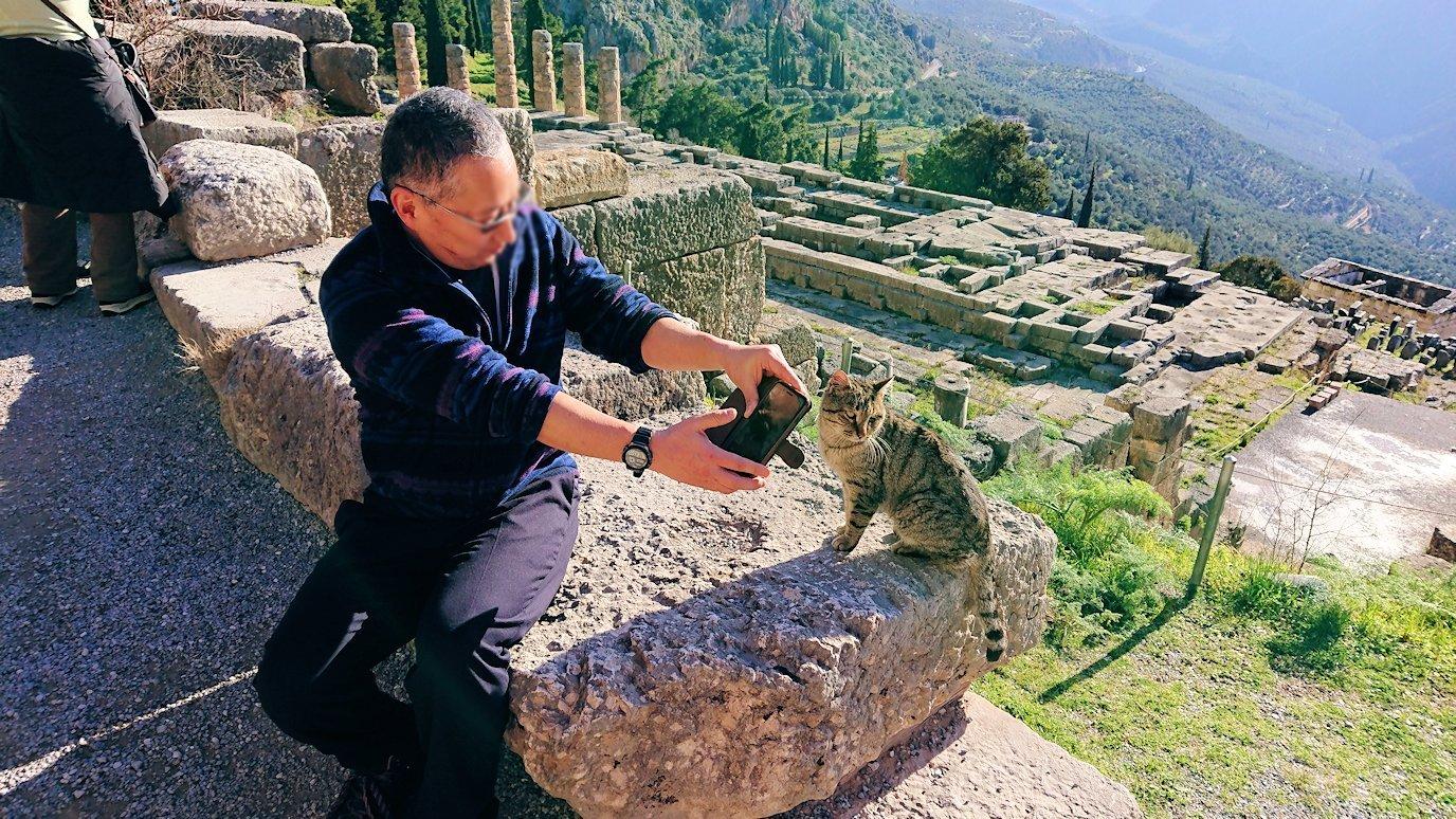 デルフィ遺跡の劇場跡で猫の写真を撮る2