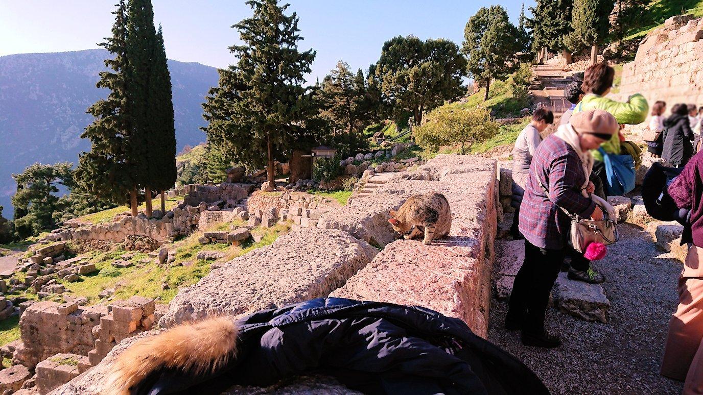 デルフィ遺跡の劇場跡で猫の写真を撮る4