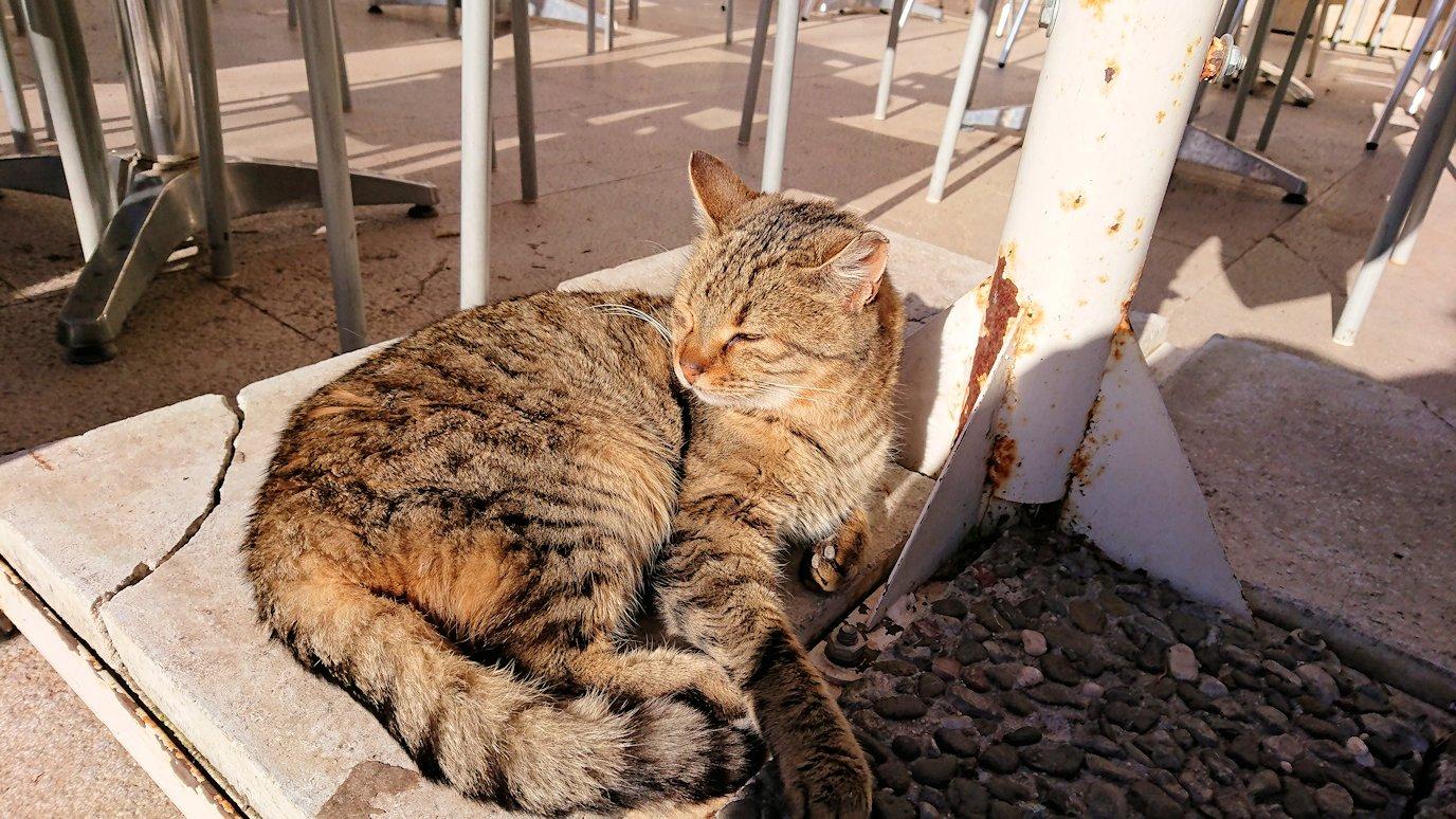 デルフィ遺跡観光終了し主である猫の写真撮影
