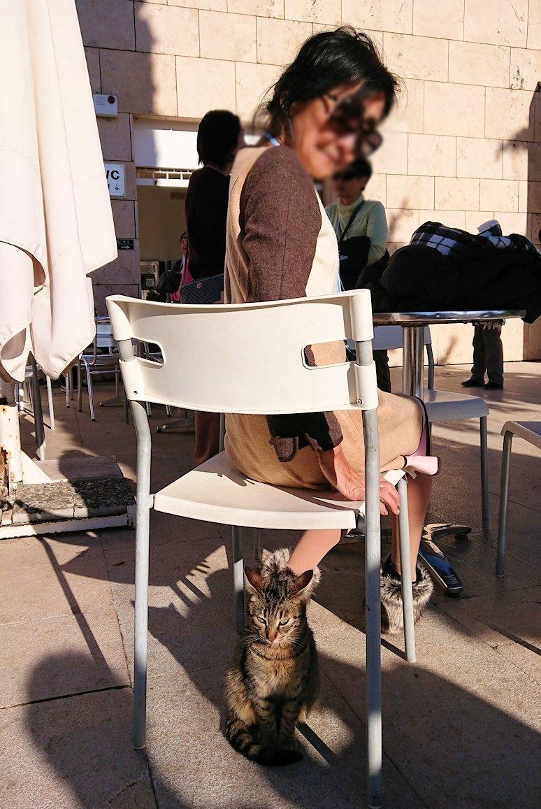 デルフィ遺跡観光終了し主である猫の写真撮影2