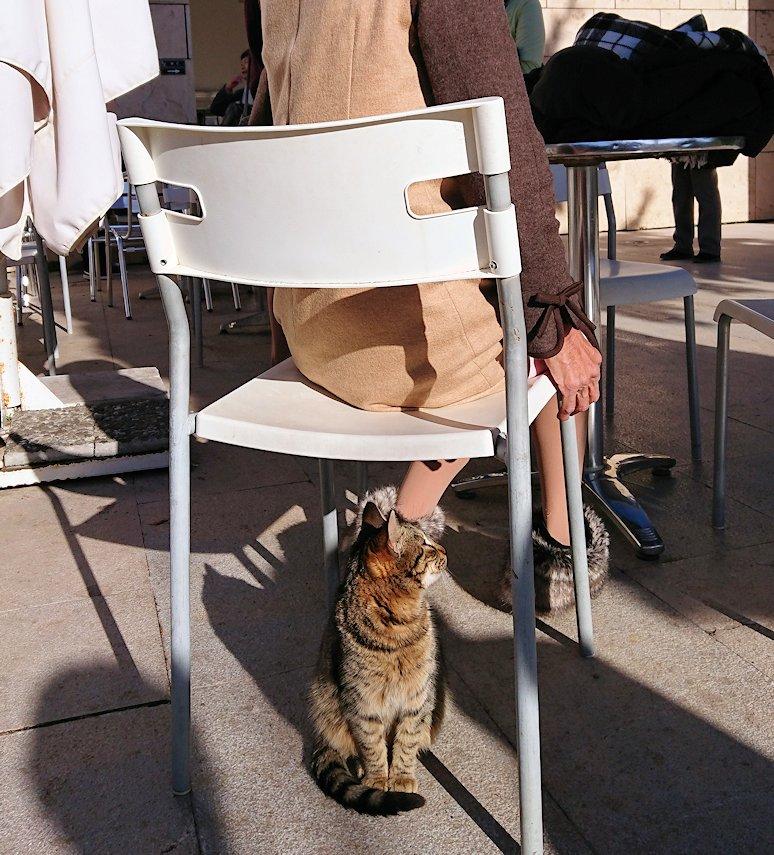 デルフィ遺跡観光終了し主である猫の写真撮影3