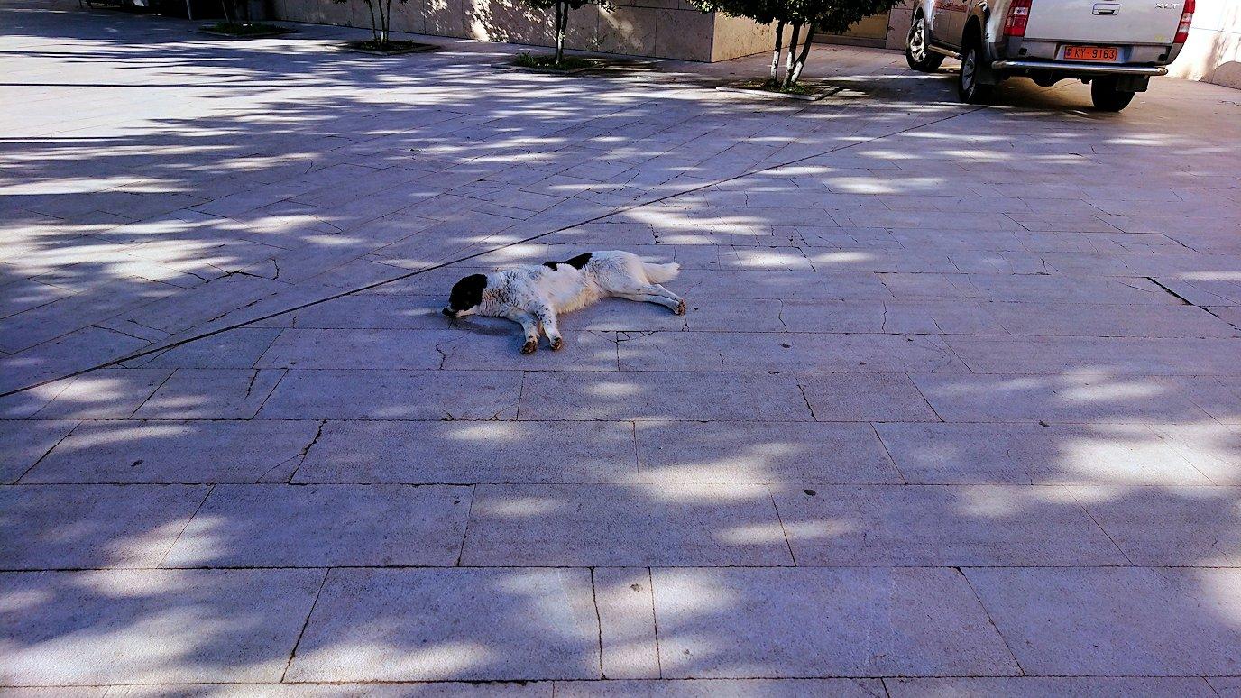 デルフィ遺跡観光終了しお疲れのワンちゃんの写真を撮る