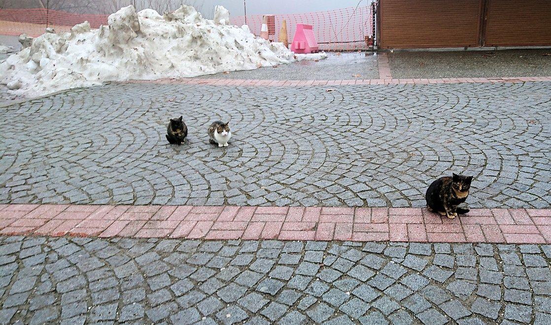 メテオラ地方のアギオス・ニコラオス修道院の入口付近で出迎える猫達