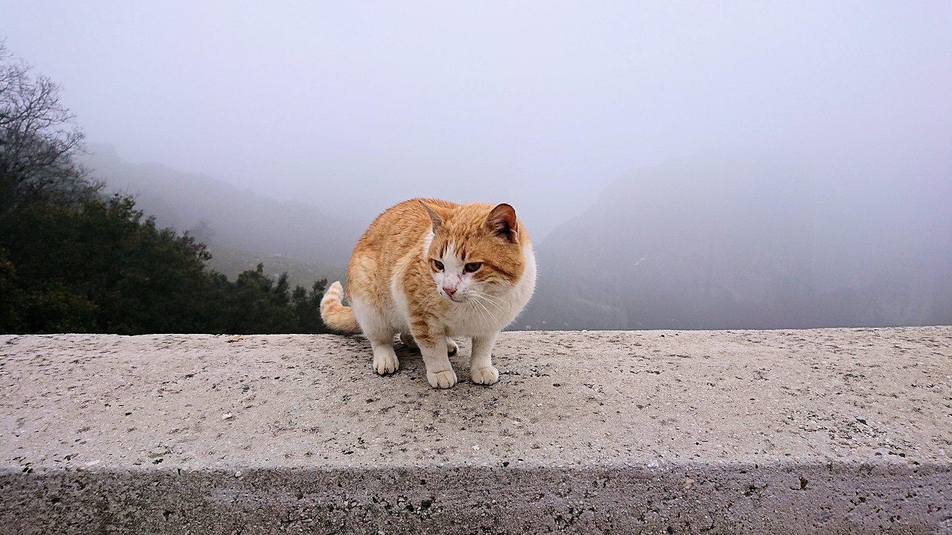 メテオラ地方で移動中に写真スポットに居た猫