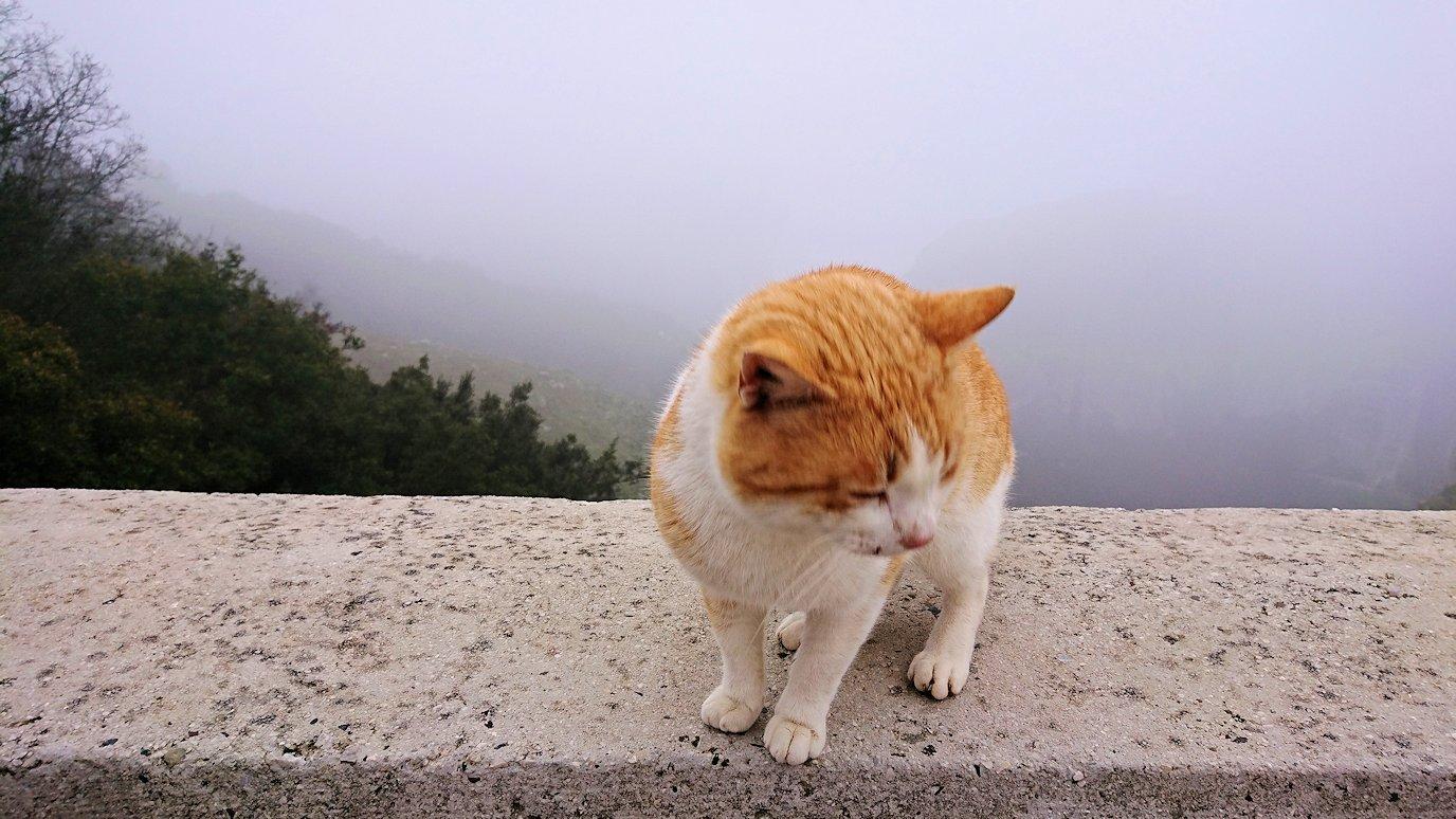 メテオラ地方で移動中に写真スポットに居た猫3