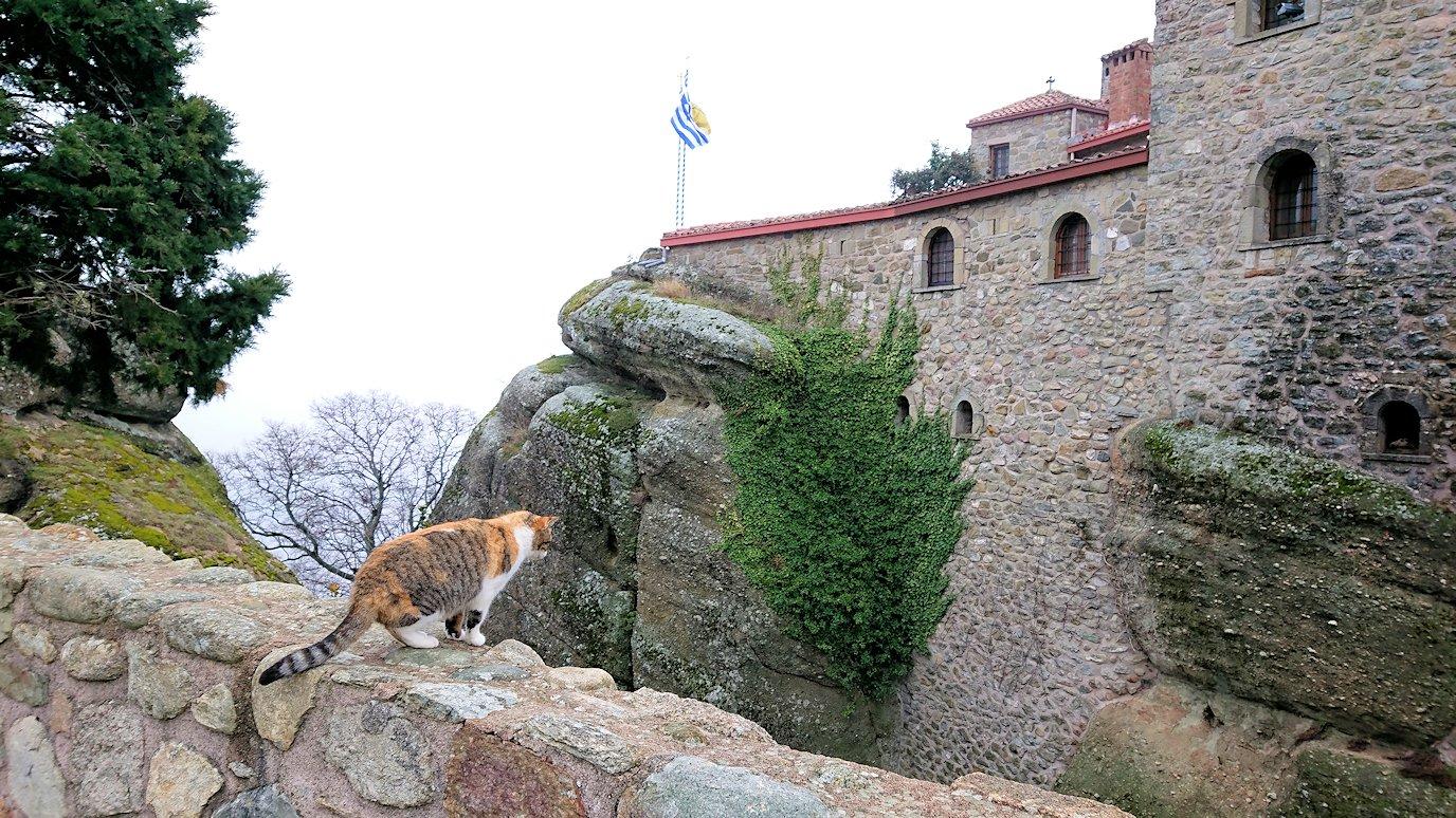 メテオラ地方でアギオス・ステファノス修道院を見守る猫