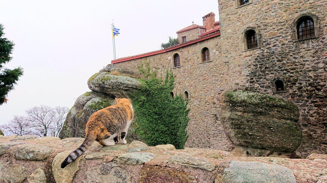メテオラ地方でアギオス・ステファノス修道院を見守る猫2