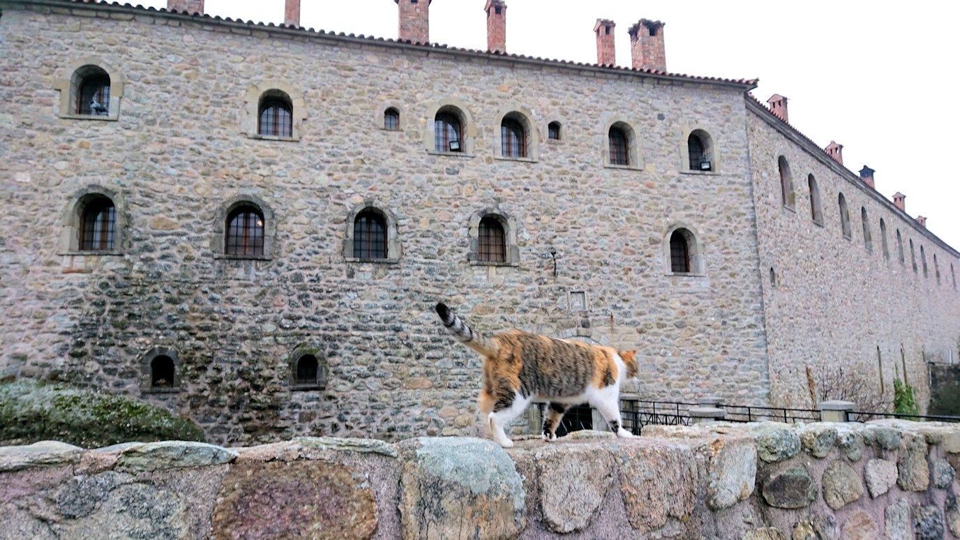 メテオラ地方でアギオス・ステファノス修道院を見守る猫3