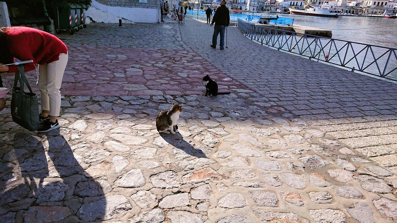 エーゲ海クルーズでイドラ島に到着しまずは猫ちゃんがお出迎え3