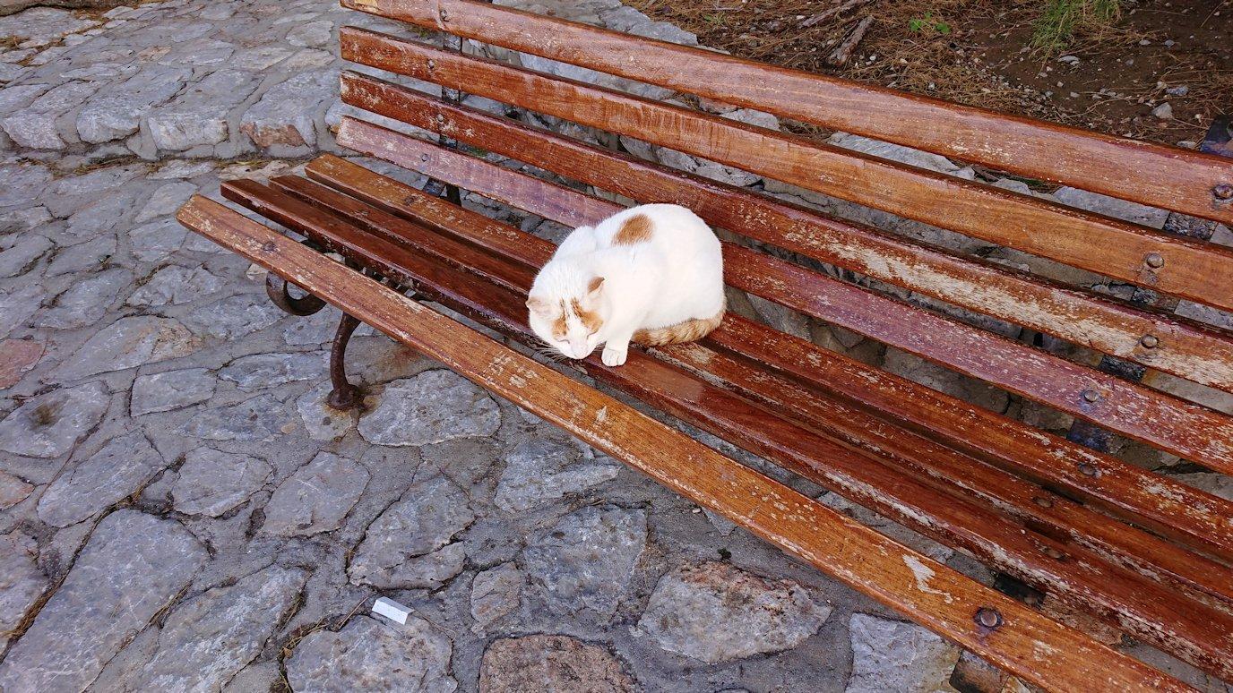 エーゲ海のイドラ島でまずは猫ちゃんとお遊び2