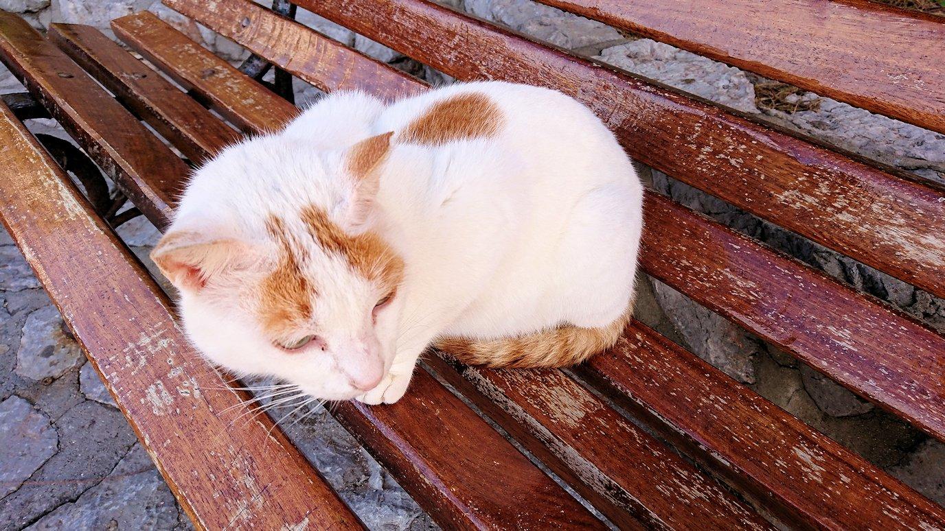 エーゲ海のイドラ島でまずは猫ちゃんとお遊び3