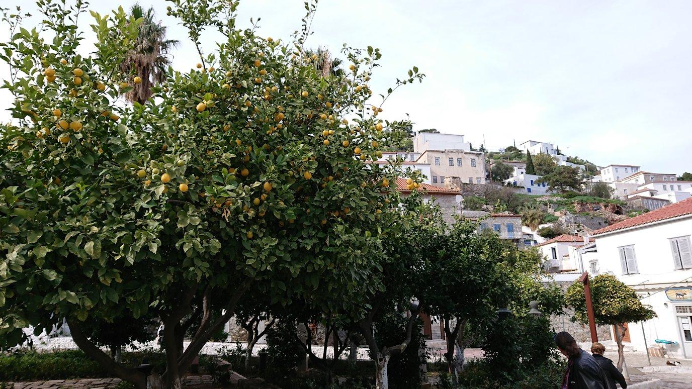 エーゲ海のイドラ島のオシャレな街で売っていた果物5