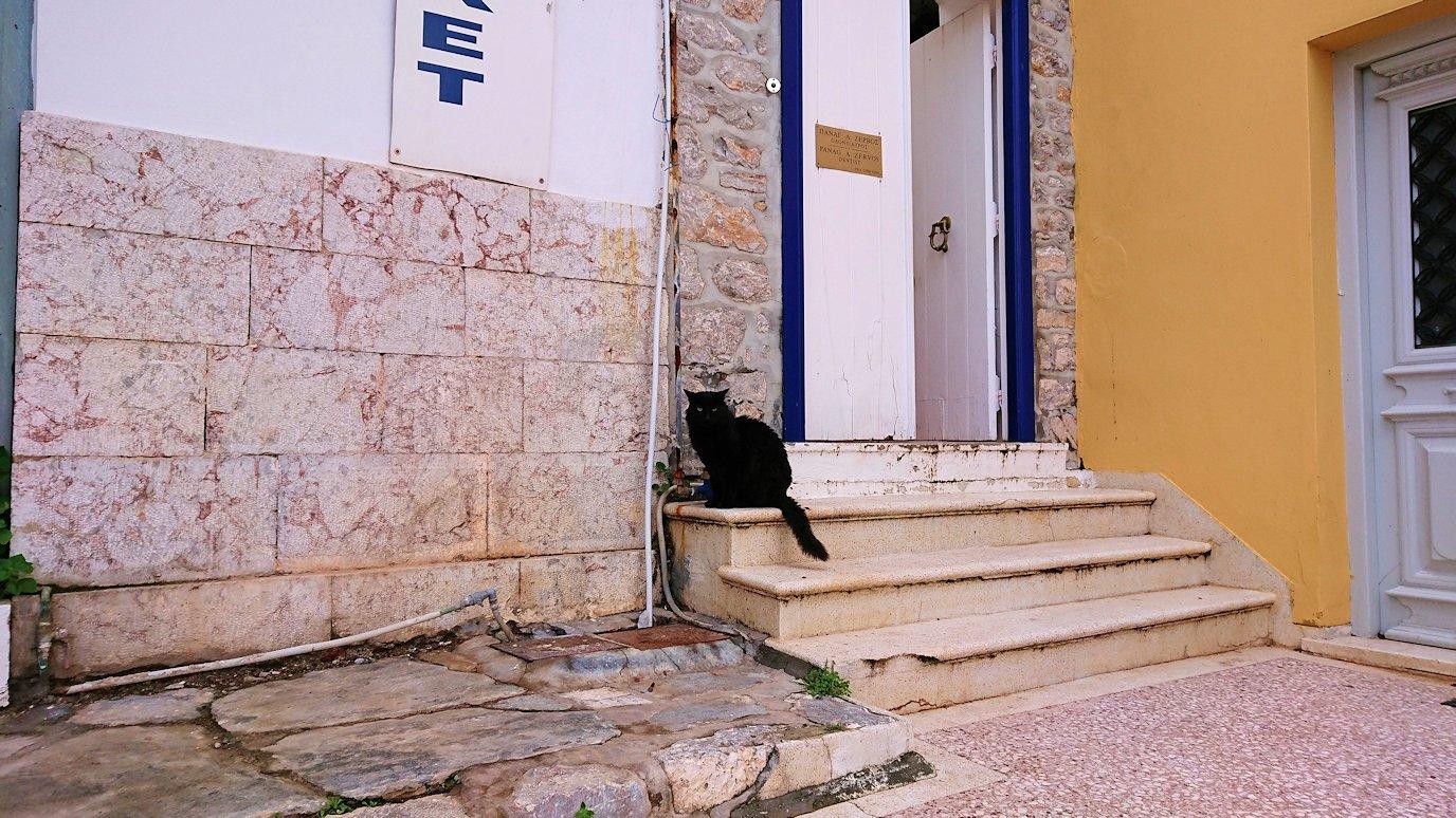 エーゲ海のイドラ島のオシャレな街で見かけた猫ちゃん2