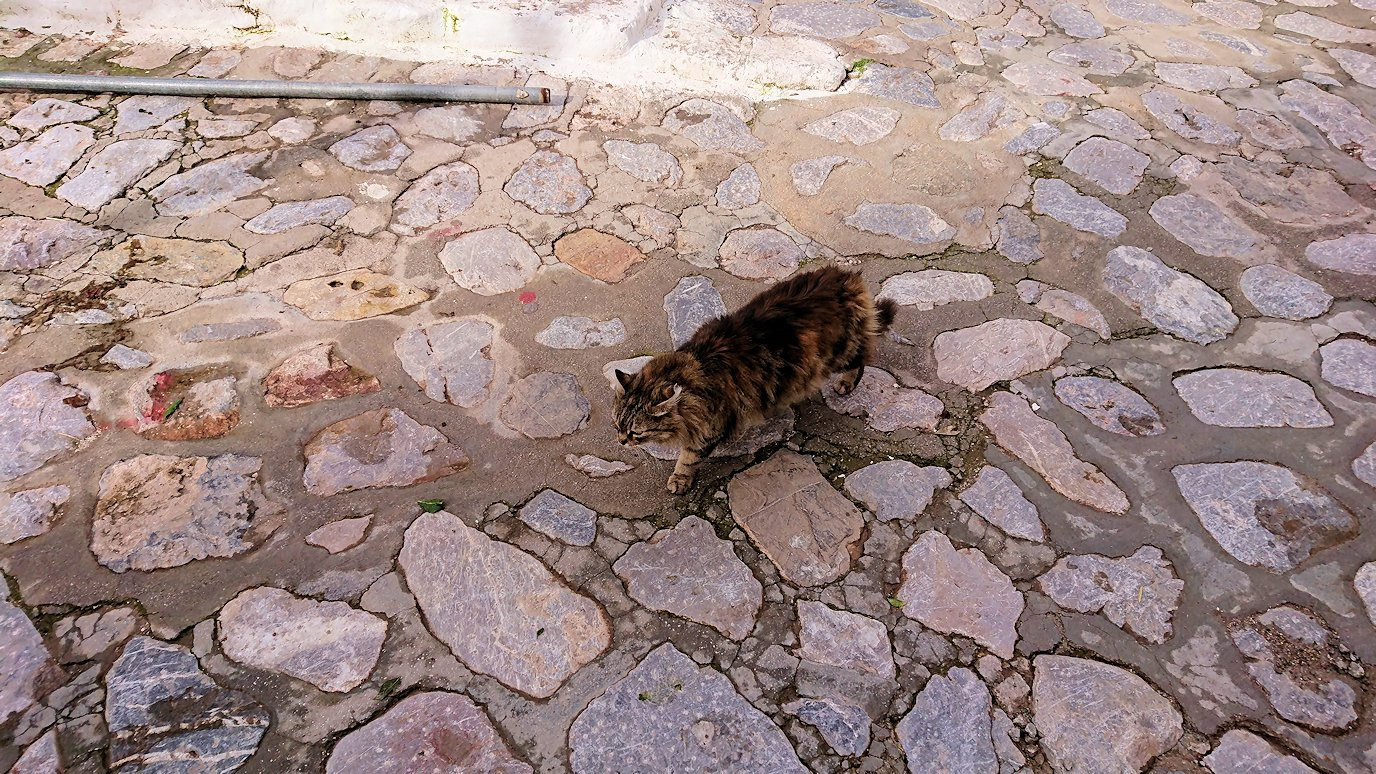 エーゲ海のイドラ島のオシャレな街で見かけた猫ちゃん3