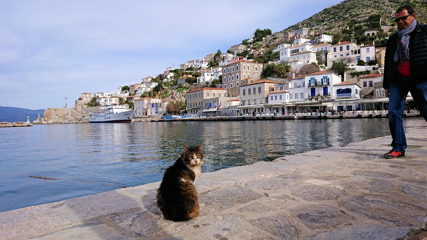 エーゲ海のイドラ島のオシャレな街で港近くでただずむ猫ちゃん